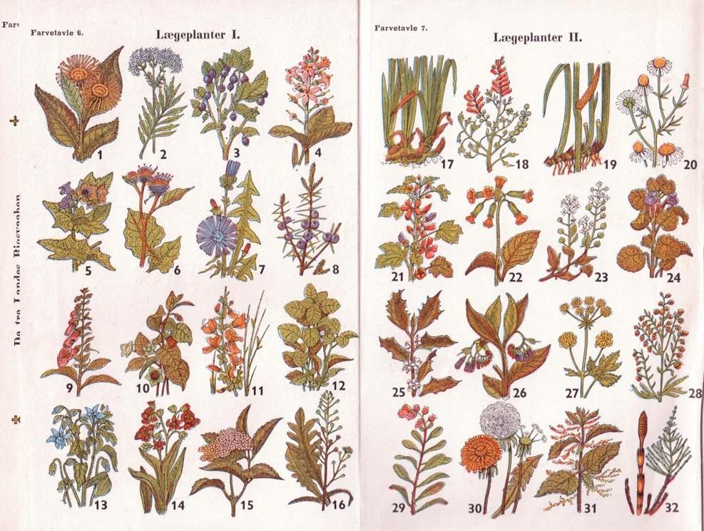 lægeplanter i danmark